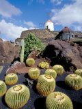 Cacti and Windmill at Jardin De Los Cactus, Lanzarote, Spain Photographic Print by Marco Simoni