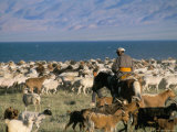 Rounding up Flocks, Uureg Nuur Lake, Uvs, Mongolia, Central Asia Photographic Print by Bruno Morandi