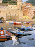 Cat by Harbour, Village of Vernazza, Cinque Terre, Unesco World Heritage Site, Liguria, Italy Photographic Print by Bruno Morandi