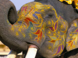 Painted Elephant, Pushkar, Rajasthan State, India Photographic Print by Marco Simoni