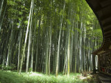 Bamboo Forest, Hokokuji Temple Garden, Kamakura, Kanagawa Prefecture, Japan Photographic Print by Christian Kober