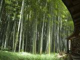 Bamboo Forest, Hokokuji Temple Garden, Kamakura, Kanagawa Prefecture, Japan Photographic Print by Christian Kober