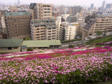 Flower Bed, View of City, Kobe City, Kansai, Honshu Island, Japan Photographic Print by Christian Kober