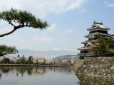 Pine Tree, Matsumoto Castle, Matsumoto City, Nagano Prefecture, Honshu Island, Japan Photographic Print by Christian Kober