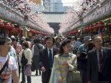 Asakusa Temple, Cherry Blossom, Asakusa, Tokyo City, Honshu Island, Japan Photographic Print by Christian Kober
