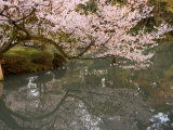 Cherry Blossom, Kenrokuen Garden, Kanazawa City, Ishigawa Prefecture, Honshu Island, Japan Photographic Print by Christian Kober