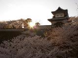 Sunset, Cherry Blossom, Kanazawa Castle, Kanazawa City, Ishigawa Prefecture, Honshu Island, Japan Photographic Print by Christian Kober