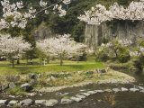 Spring Cherry Blossoms Near River with Stepping Stones, Kagoshima Prefecture, Kyushu, Japan Photographic Print by Christian Kober