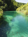 Small Fish in Turquoise Lake, Plitvice Lakes National Park, Unesco World Heritage Site, Croatia Photographic Print by Christian Kober