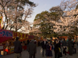 Cherry Blossom Viewing Hanami, Kanazawa City, Honshu Island, Japan Photographic Print by Christian Kober
