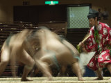 Sumo Wrestlers Competing, Grand Taikai Sumo Wrestling Tournament, Kokugikan Hall Stadium, Tokyo Photographic Print by Christian Kober