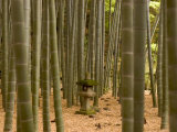Stone Lantern, Bamboo Forest, Kamakura City, Kanagawa Prefecture, Honshu Island, Japan Photographic Print by Christian Kober