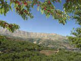 Cherry Tree, Bcharre, Qadisha Valley, Unesco World Heritage Site, North Lebanon, Middle East Photographic Print by Christian Kober