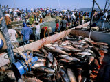 Tuna Fish Catch, Favignana Island, Egadi Islands, Sicily, Italy, Mediterranean Photographic Print by Oliviero Olivieri