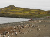 Penguin Colony, Aitcho Island, South Shetland Islands, Antarctica, Polar Regions Photographic Print by Sergio Pitamitz