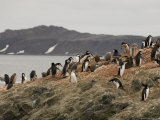Chinstrap Penguins, Aitcho Island, South Shetland Islands, Antarctica, Polar Regions Photographic Print by Sergio Pitamitz