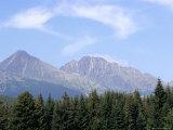 Mountain Pines, Vysoke Tatry Mountains, Vysoke Tatry, Slovakia Photographic Print by Richard Nebesky