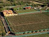 Vineyard Near Santiago Del Teide, Tenerife, Canary Islands, Spain, Atlantic Photographic Print by Sergio Pitamitz