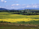 Wide Open Rolling Landscape, High Country, Australia Photographic Print by Richard Nebesky