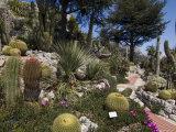 Botanic Garden (Jardin Exotique), Eze Village, Alpes Maritimes, Provence, Cote d'Azur, France Photographic Print by Sergio Pitamitz