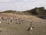 Gentoo Penguins, Aitcho Island, South Shetland Islands, Antarctica, Polar Regions Photographic Print by Sergio Pitamitz