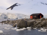 British Base, Port Lockroy, Antarctic Peninsula, Antarctica, Polar Regions Photographic Print by Sergio Pitamitz