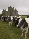 Dunbrody Abbey, Dumbrody, County Wexford, Leinster, Republic of Ireland (Eire) Photographic Print by Sergio Pitamitz