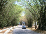 Bamboo Avenue, St. Elizabeth, Jamaica, West Indies, Central America Photographic Print by Sergio Pitamitz