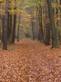 Forest Way, Paderborn, Germany Photographic Print by Thorsten Milse