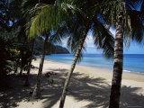 Castara Bay, Tobago, West Indies, Caribbean, Central America Photographie par Yadid Levy