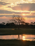 Sunset and Waterhole, Hwange National Park, Zimbabwe, Africa Photographic Print by Sergio Pitamitz