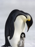 Emperor Penguin (Aptenodytes Forsteri) and Chick, Snow Hill Island, Weddell Sea, Antarctica Photographic Print by Thorsten Milse