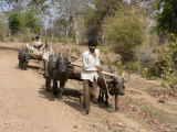 Bullock Carts, Tala, Bandhavgarh National Park, Madhya Pradesh, India Photographic Print by Thorsten Milse