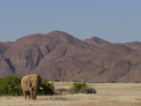 Desert-Dwelling Elephant, Loxodonta Africana Africana, Dry River, Kaokoland, Namibia, Africa Photographic Print by Thorsten Milse