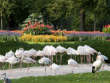 Wilhelma Zoo and Botanical Gardens, Stuttgart, Baden Wurttemberg, Germany Photographic Print by Yadid Levy
