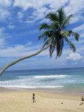 Palm Tree and Coconut Seller, Hikkaduwa Beach, Sri Lanka Photographie par Yadid Levy