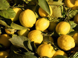 Close-Up of Lemons in the Market, Menton, Provence, Cote d'Azur, France Photographic Print by Sergio Pitamitz