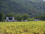 House in the Wine Growing Area of Franschhoek, Cape Province, South Africa, Africa Photographic Print by Yadid Levy