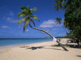 Les Salines Beach, Near Sainte Anne, Martinique, Lesser Antilles Photographic Print by Yadid Levy
