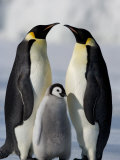 Emperor Penguins (Aptenodytes Forsteri) and Chick, Snow Hill Island, Weddell Sea, Antarctica Lámina fotográfica por Thorsten Milse