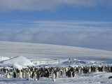 Colony of Emperor Penguins (Aptenodytes Forsteri), Snow Hill Island, Weddell Sea, Antarctica Photographic Print by Thorsten Milse