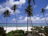 Matemwe Beach, Zanzibar, Tanzania, East Africa, Africa Photographic Print by Yadid Levy