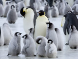 Colony of Emperor Penguins and Chicks, Snow Hill Island, Weddell Sea, Antarctica Photographic Print by Thorsten Milse