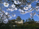 Spring Blossom and Himeji Castle, Built in 1580, Himeji, West Honshu, Japan Photographic Print by Robert Francis