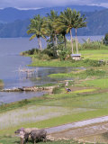 Paddy Fields at Tuk Tuk on Samosir Island in Lake Toba, Sumatra, Southeast Asia Photographic Print by Robert Francis