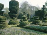 Topiary, Levens Hall, Cumbria, England, United Kingdom Photographic Print by Christina Gascoigne