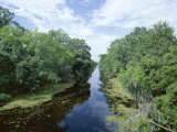 Bayou in Swampland at Jean Lafitte National Historic Park and Preserve, Louisiana, USA Photographic Print by Robert Francis