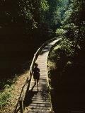 Walkway Through Rainforest, Niah National Park, Sarawak, Island of Borneo, Malaysia Photographic Print by Robert Francis