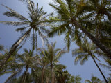 Palm Trees at Kata, Phuket, Thailand, Southeast Asia Photographic Print by Joern Simensen