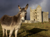 A Donkey Grazes in Front 17th Century Monea Castle, County Fermanagh, Ulster, Northern Ireland Photographie par Andrew Mcconnell